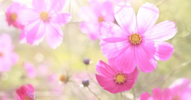 ピンクは安らぎや愛情、春の印象を与える